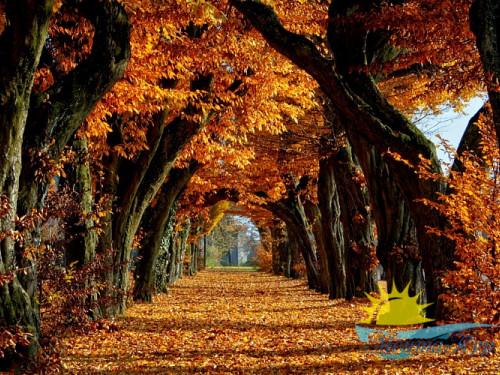 Экскурсионныйтур «Болдинская осень: Нижний - Болдино»